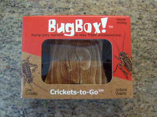 bug box crickets