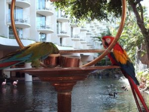 parrots in maui resort