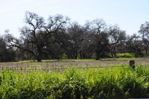 beautiful green field in CA