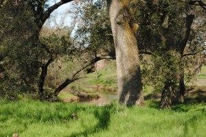 green grass in field in CA