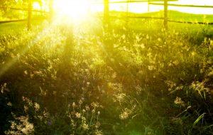 beautiful sunshine in field